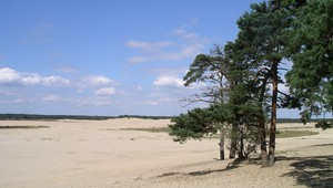 National Park Loonse & Drunense duinen