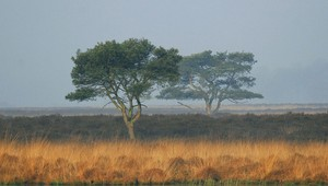 Brabants_landschap_21